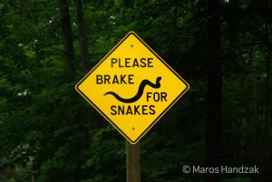 Please Brake for Snakes